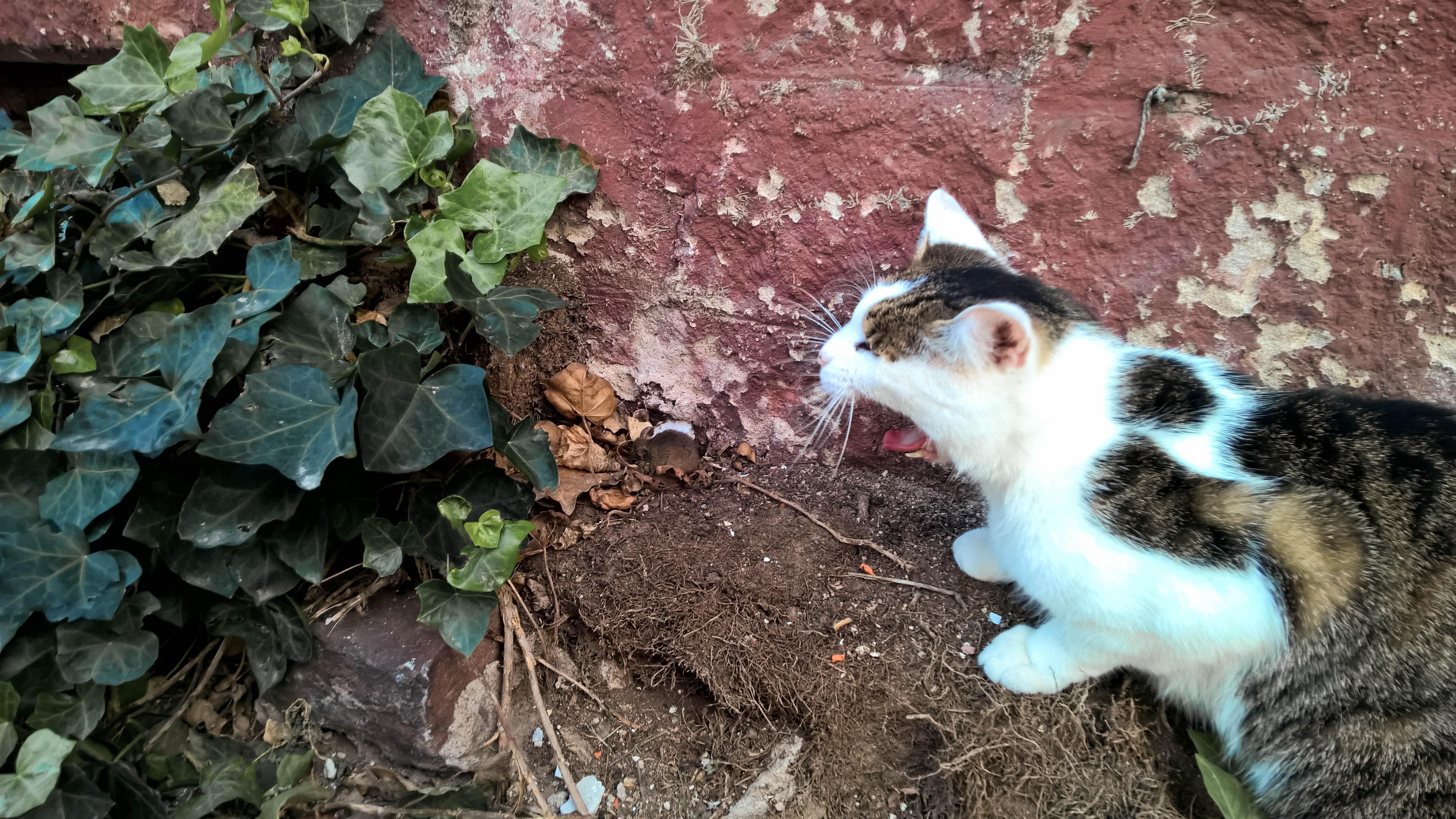 Nokia Lumia 1520 Photo Example - Cat and Mouse